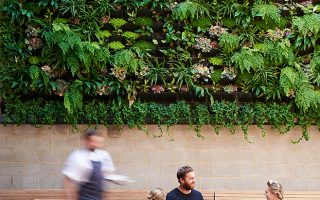 Paps vertical garden commercial green wall Perth