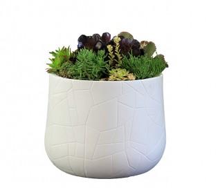 Serralunga Memory Pot Succulent Bowl