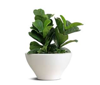Serralunga Ming Planter | Low